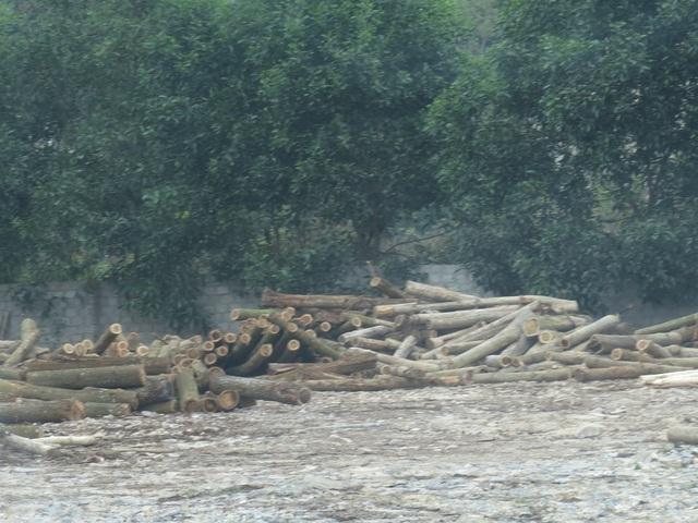 Xưởng gỗ Thắng Lợi tại huyện Quỳ Hợp