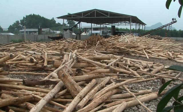 Xưởng sản xuất gỗ dăm của Cty Thắng Lợi