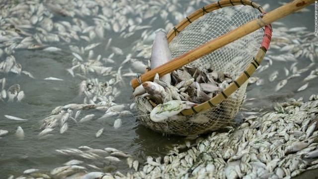 Hơn 100 tấn cá chết do nhà máy xả thải nồng độ amoniac vượt mức cho phép. Nguồn: CNN