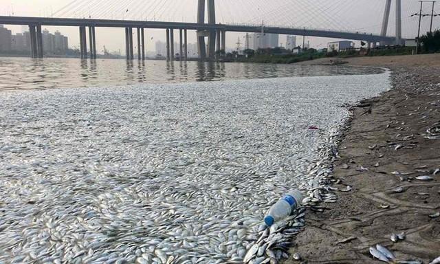 Nhà máy lưu trữ đến 700 tấn chất độc cyanide bị nổ, sau đó hàng nghìn con cá chết ở Thiên Tân, Trung Quốc. Nguồn: Rex