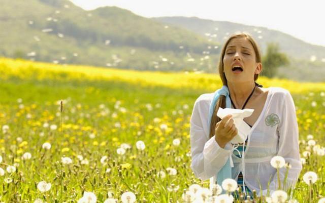 Phấn hoa có thể là nguyên nhân gây viêm mũi dị ứng