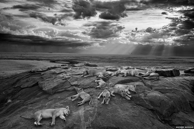 Hình ảnh ảm đạm về những chú sư tử nghỉ ngơi trên một lộ đá ở Serengeti đã giành chiến thắng trong giả thưởng nhiếp ảnh động vật hoang dã quốc tế của năm (WPY).