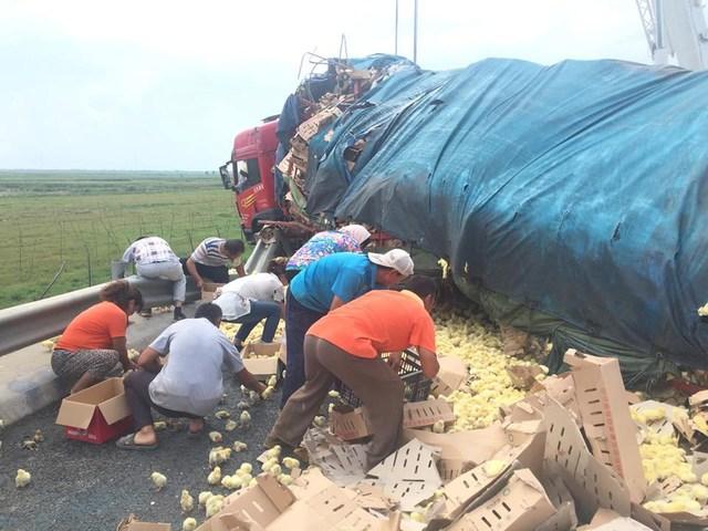 Một xe tải bỗng dưng lật đổ trên đường cao tốc ở tỉnh Sơn Đông, miền Đông Trung Quốc vào ngày 26/8. May mắn không có thiệt hại về người nhưng 10.000 con gà con trên xe bị đổ xuống đường. (Nguồn: CCTVNews)