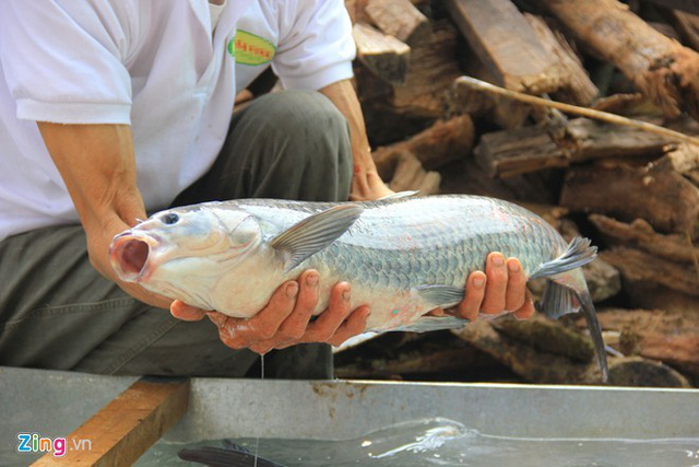 Món cá kho làng Vũ Đại phải được chế biến từ cá trắm đen nguyên liệu. Ảnh: Ngọc Lan.