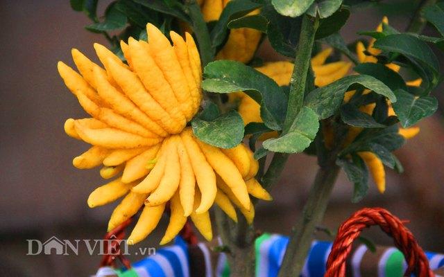 Cận cảnh trái phật thủ bonsai dáng độc