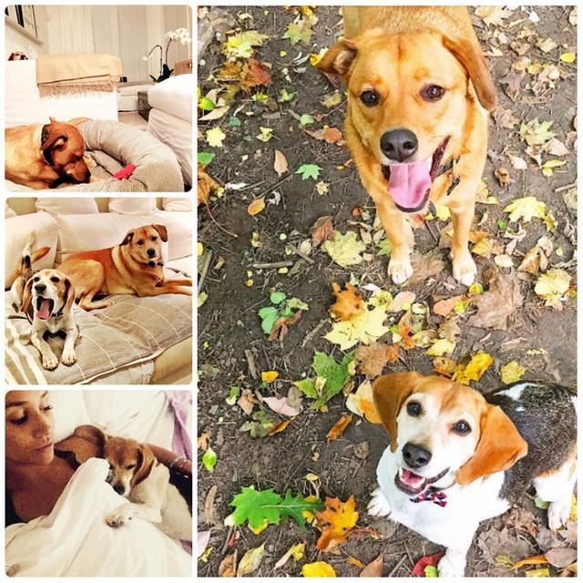 Những chú chó được xuất hiện trên Instagram của người đẹp với tần suất dày đặc.