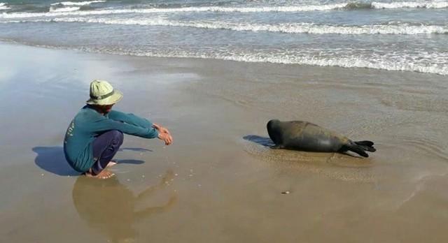 Hình ảnh con hải cẩu lúc chưa bị giết hại