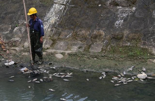Công nhân đã tới hiện trường vớt cá chết đưa đi tiêu hủy. Ảnh: Đ.H