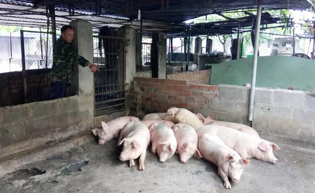Người dân Nha Trang khốn đốn vì heo bất ngờ chết hàng loạt trong nửa tháng qua