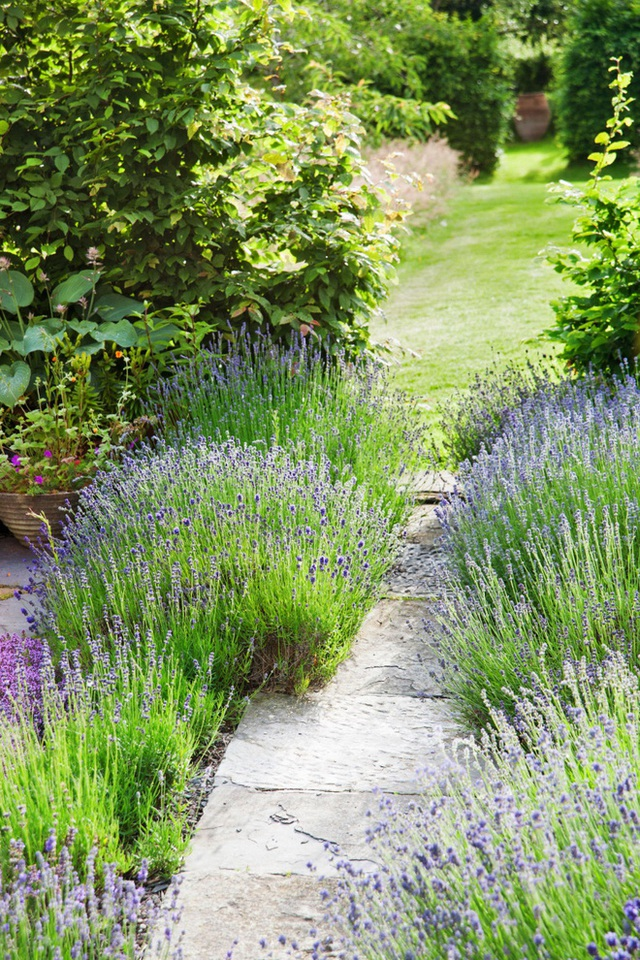1. Trồng hoa dọc lối đi vừa mang màu sắc mới lạ đến cho khu vườn vừa không làm phá hủy cách quy hoạch đã được làm sẵn.