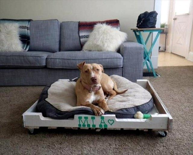11. Nếu nhà bạn có nuôi thú cưng, thì việc biến những thanh gỗ pallet thành lãnh thổ riêng cho chúng cũng sẽ là ý tưởng tuyệt vời.