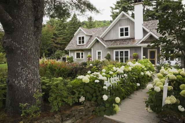 11. Trồng cẩm tú cầu dọc lối đi vào nhà giúp sân vườn rực rỡ và xinh đẹp.