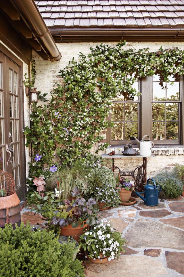 16. Chọn một góc sân gần khoảng tường nhà để trồng hoa leo và hoa bụi xung quanh tạo nét mới mẻ và vẻ đẹp lãng mạn.