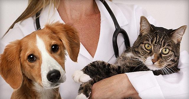 Loài giun ký sinh dưới da của người phụ nữ thường tìm thấy ở chó và mèo.
