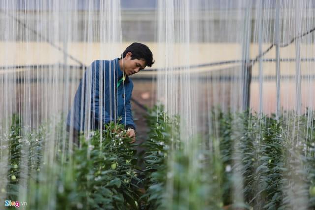 Anh kiên trì tìm tòi nghiên cứu, thay đổi chế độ dinh dưỡng, cách bón phân, cách tỉa cành phù hợp. Miệt mài 2 năm, đến lứa thứ 3 vườn dưa của anh đã cho năng suất ổn định, quả ngọt và thơm. Hiện vợ chồng anh mở rộng diện tích trồng lên 1.000 m2 với gần 4.000 dây dưa.