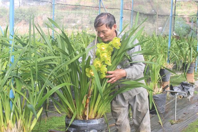 Ông Hùng đang tỉ mỉ chăm sóc vườn địa lan của gia đình