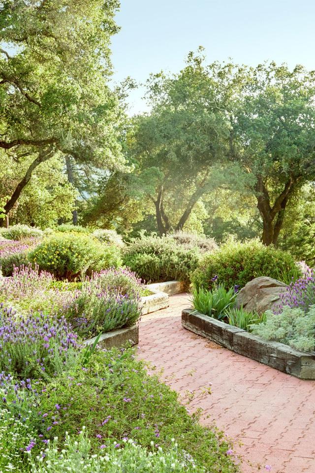 4. Trồng thêm các loại hoa bên cạnh những gốc cây lâu năm.
