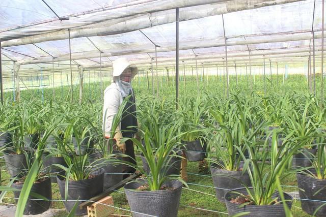 Một góc vườn lan giống hơn 8.000 cây của gia đình ông Hùng