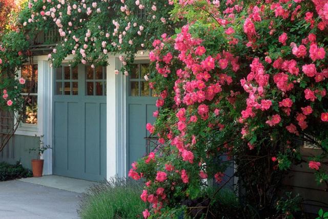 8. Khoảng diện tích nhỏ xinh trước cổng được sơn màu sắc đậm, bạn có thể khéo léo trồng các loại hoa có màu sắc tươi tắn để không gian vào nhà thêm bắt mắt.
