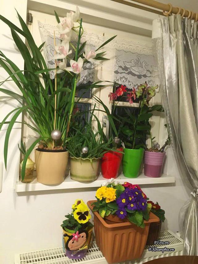 Chị Thu Hà tận dụng mọi diện tích ở ban công và bậu cửa để đặt chậu hoa mà mình yêu thích.