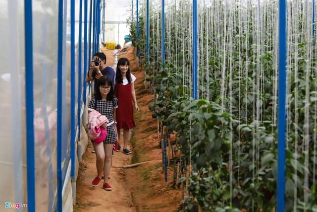 Nhiều du khách đến Đà Lạt biết vườn của anh Định thường đến tham quan, chụp ảnh và mua dưa.