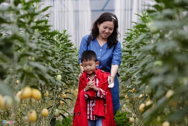 Bé Khôi Nguyên (An Giang) vui chơi cùng mẹ giữa vườn dưa.
