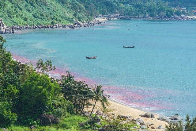 Vệt nước màu đỏ được người dân ghi lại ở Bãi Nam, bán đảo Sơn Trà. Ảnh: Facebook Upochy Nguyễn