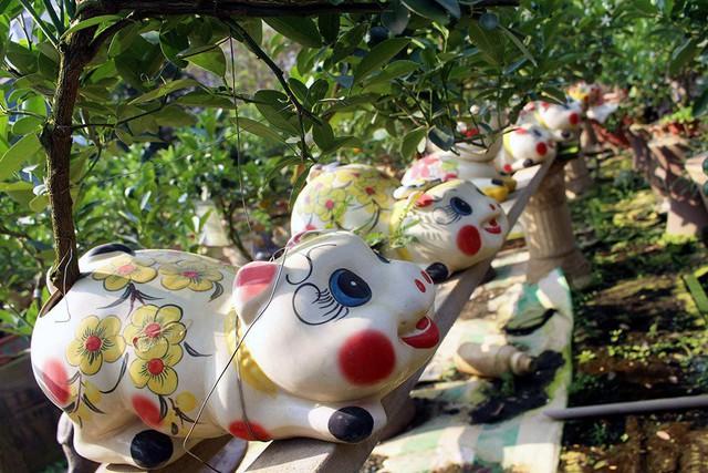 Không khí Tết đã về trên nhiều nhà vườn trồng quất ở Tứ Liên. Những chú heo cõng quất bonsai đang trở thành điểm nhấn độc đáo trong dịp chào xuân Kỷ Hợi 2019.