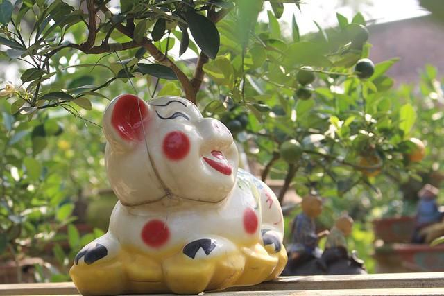 Chủ nhân các vườn quất tạo hình các chú heo thường có vẻ đáng yêu, dễ mến với mong ước năm mới luôn vui vẻ, may mắn, an khang thịnh vượng.