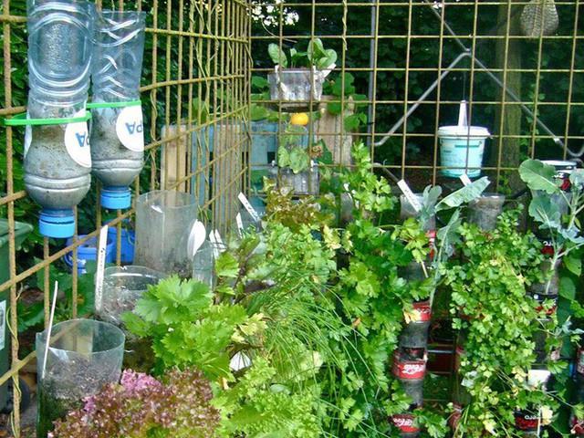 Giải thưởng lớn nhất mà Willem có được từ sự tâm huyết nghiên cứu và chia sẻ công trình của mình chính là ánh mắt lấp lánh hạnh phúc của trẻ em, của những người già có thêm nguồn thực phẩm sạch từ trong khu vườn nhỏ xinh của họ. Đó cũng là cách phát triển bền vững thực sự!