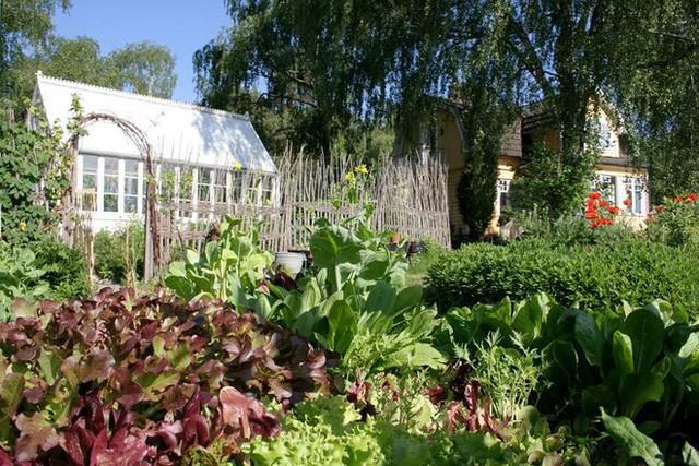 Khu vườn ai nhìn cũng mê mẩn bởi được trồng bằng tâm huyết và kinh nghiệm suốt những năm tháng tuổi trẻ của chủ nhân.