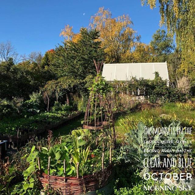 Khu vườn với đủ các loại rau, một màu xanh trải dài mát mắt.