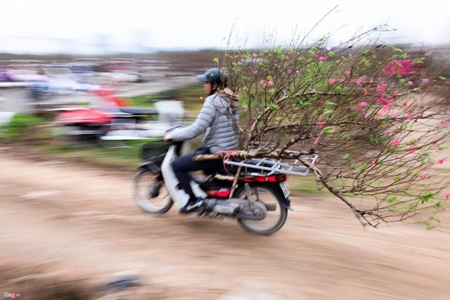 Các chủ vườn cũng nhận vận chuyển hoa đến tận tay khách hàng ngay từ thời điểm này.