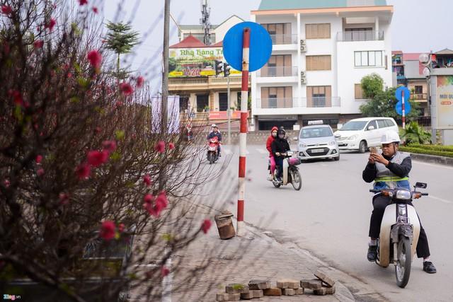 Do còn gần một tháng mới đến Tết nên khu vực này chưa có nhiều khách hàng. Tuy nhiên việc đào xuống phố sớm như thế này cũng hấp dẫn nhiều người dừng lại để ngắm nhìn.