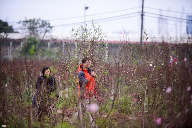 Trong khi đó, một số người đến tận vườn hoa Nhật Tân để lựa chọn cho mình những cành đào ưng ý.