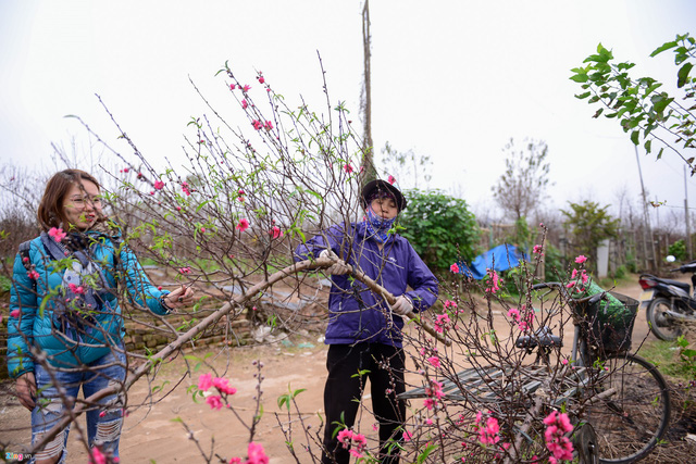 """Đây là lần thứ 2 trong mùa đào năm nay chị Hân (Đống Đa) đi mua hoa: """"Vì rất thích hoa đào nên khi hoa nhen nhóm nở một tuần trước mình đã đi mua rồi, giá mỗi cành từ 150-200.000 đồng""""."""