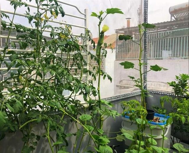 Ngọc Lan và Thanh Bình từng khiến người người ghen tỵ khi cùng nhau thu hoạch rau ở nông trại trên sân thượng mà giờ đã đường ai nấy đi - Ảnh 10.