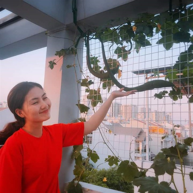 Ngọc Lan và Thanh Bình từng khiến người người ghen tỵ khi cùng nhau thu hoạch rau ở nông trại trên sân thượng mà giờ đã đường ai nấy đi - Ảnh 11.