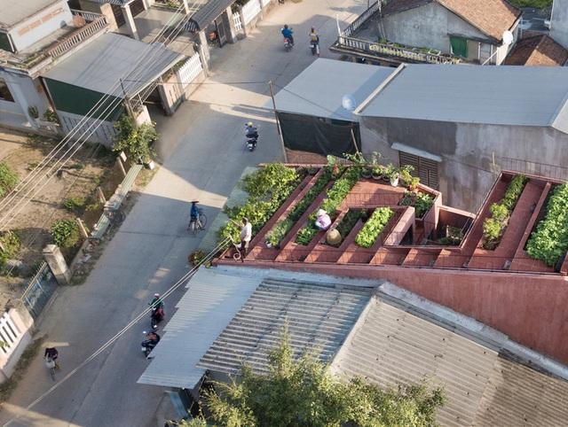 7 bậc thang trồng rau trên mái nhà Quảng Ngãi  - Ảnh 3.