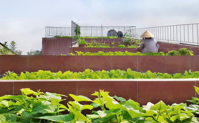 7 bậc thang trồng rau trên mái nhà Quảng Ngãi  - Ảnh 5.
