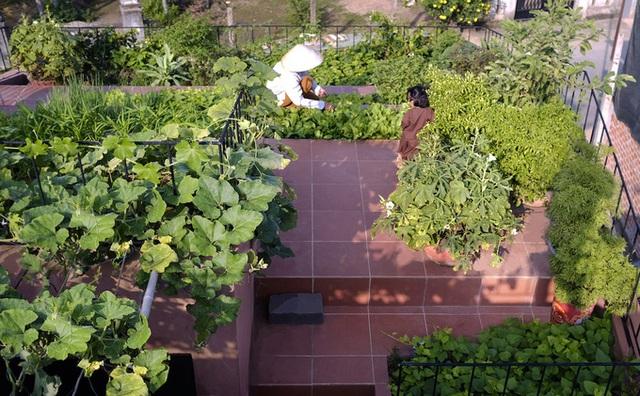 7 bậc thang trồng rau trên mái nhà Quảng Ngãi  - Ảnh 6.