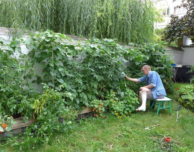Tận dụng mảnh đất nhỏ sau nhà, người đàn ông đảm đang dù chân đi phải chống nạng vẫn trồng đủ loại rau quả sạch cho cả nhà thưởng thức - Ảnh 1.