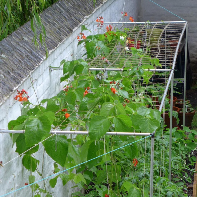 Tận dụng mảnh đất nhỏ sau nhà, người đàn ông đảm đang dù chân đi phải chống nạng vẫn trồng đủ loại rau quả sạch cho cả nhà thưởng thức - Ảnh 5.