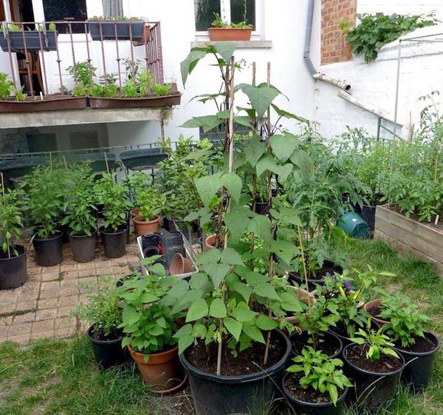 Tận dụng mảnh đất nhỏ sau nhà, người đàn ông đảm đang dù chân đi phải chống nạng vẫn trồng đủ loại rau quả sạch cho cả nhà thưởng thức - Ảnh 8.