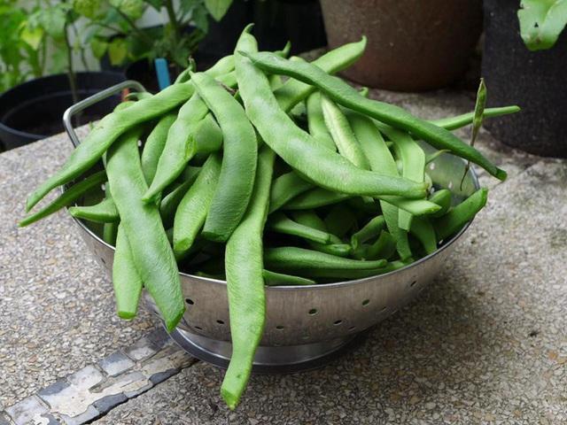 Tận dụng mảnh đất nhỏ sau nhà, người đàn ông đảm đang dù chân đi phải chống nạng vẫn trồng đủ loại rau quả sạch cho cả nhà thưởng thức - Ảnh 9.