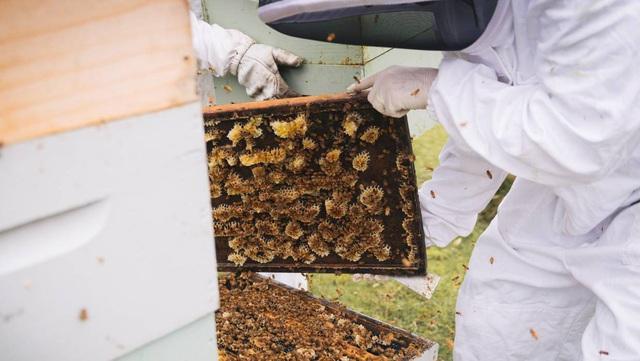 Lọ mật ong bé tý giá 40 triệu đồng được làm từ loại ong gì? - Ảnh 3.