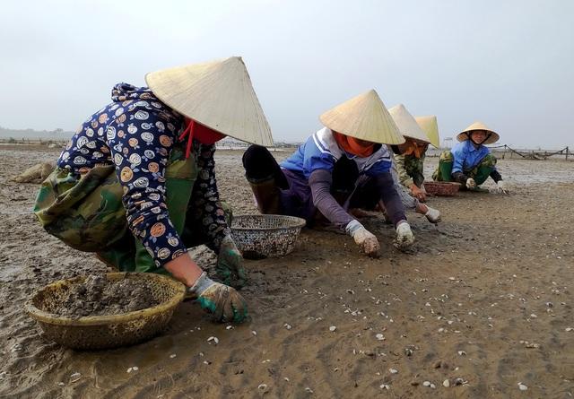 Huyện Quảng Xương (Thanh Hóa):  Gần Tết, dân lao đao vì ngao chết trắng - Ảnh 1.