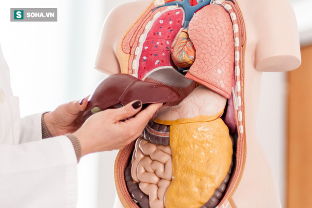 Dấu hiệu thay đổi trên da cho thấy bạn đã bị bệnh gan: Nếu trùng khớp thì nên đi khám ngay - Ảnh 1.