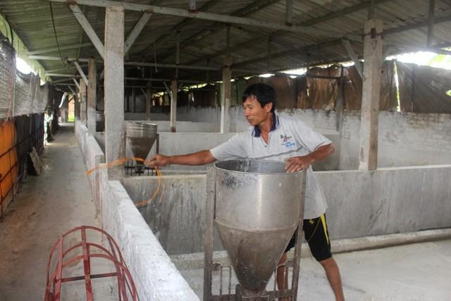 Với số tiền hỗ trợ do dịch bệnh từ số lợn bị tiêu hủy, gia đình ông Trinh chỉ đủ tiền mua thức ăn gia súc và thuốc cho đàn lợn
