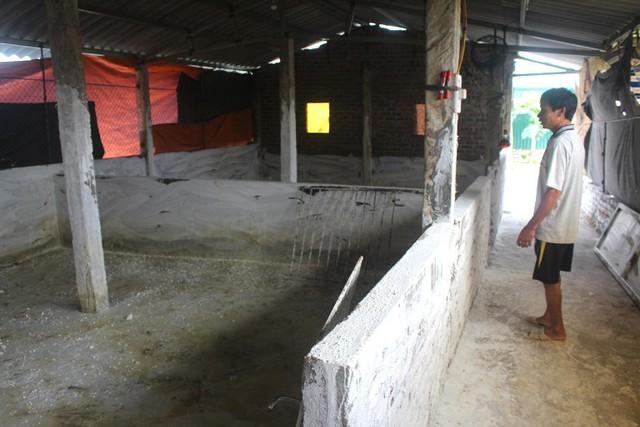 Những ô chuồng trống trơn sau khi ổ dịch tả lợn châu Phi xuất hiện từ gia trại của nhà ông Trinh